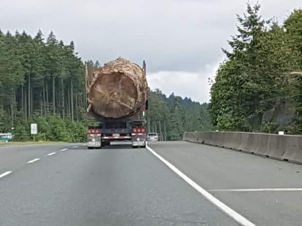 This image of a massive tree being hauled north from Nanaimo, B.C., on Vancouver Island was shared online this week and sparked an outcry from Japan to Denmark. (Lorna Beecroft - image credit)