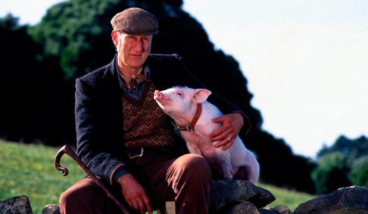 Actor James Cromwell as Farmer Hoggett in Babe - Credit: Universal Pictures