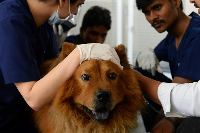 Indian vets examine dog Muffin at the Renalvet clinic for animals, which offers high-tech treatments for the pets of Delhi's well heeled