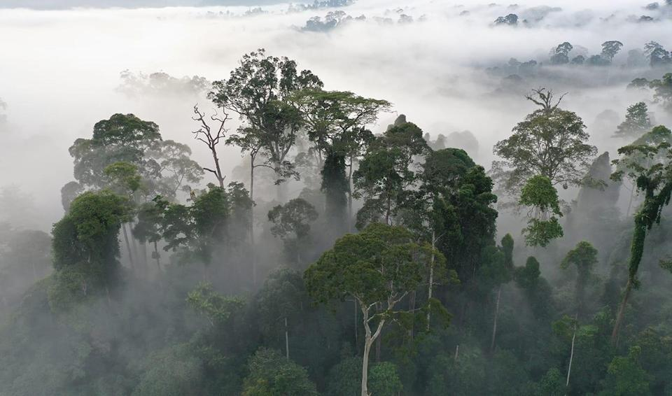 How will Facebook save the Amazon rainforest?