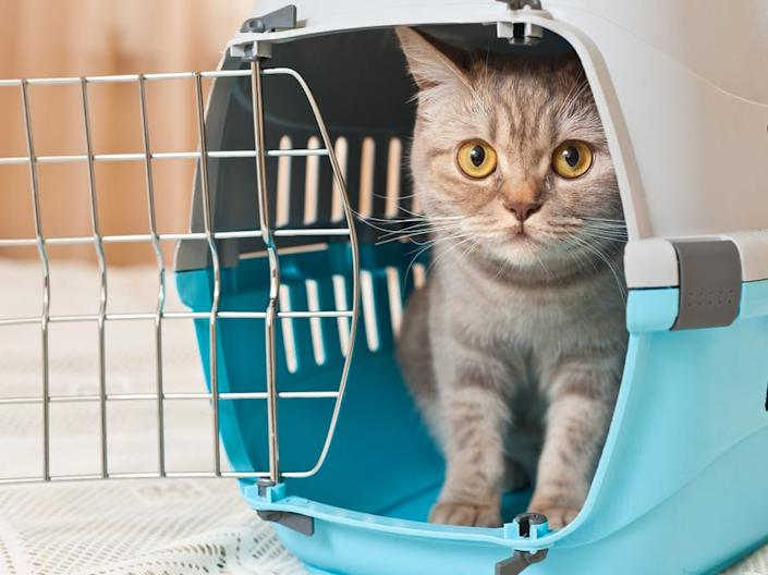 Always have a cat screened for this virus before introducing them to other cats.