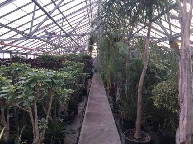 The current greenhouse facility at Lanspeary Park is around 100 years old, inefficient and too small. Most will be torn down and the greenspace will be incorporated into Lanspeary Park.