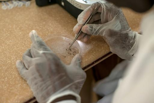 In Ghana, there were 4.8 million cases of malaria and 599 deaths last year