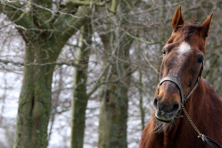 Ourasi at the Gruchy stud farm in Normandy on March 31, 2010