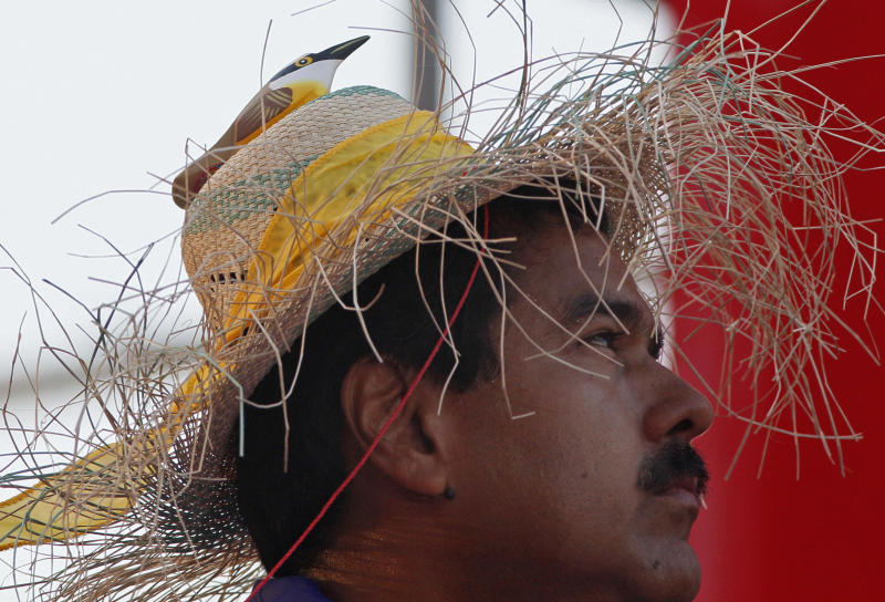"Venezuela's acting President Nicolas Maduro wears a farm worker's hat with the figure of a bird perched on the hat's crown during a presidential election campaign rally in Catia La Mar, Venezuela, Tuesday, April 9, 2013. Maduro assured last week during a campaign rally that Venezuela's late President Hugo Chavez appeared to him as a ""very small bird"" to give him his blessing. Maduro, Chavez's hand-picked successor , is running for president against opposition candidate Henrique Capriles in the presidential election set for Sunday, April 14. (AP Photo/Ariana Cubillos)"