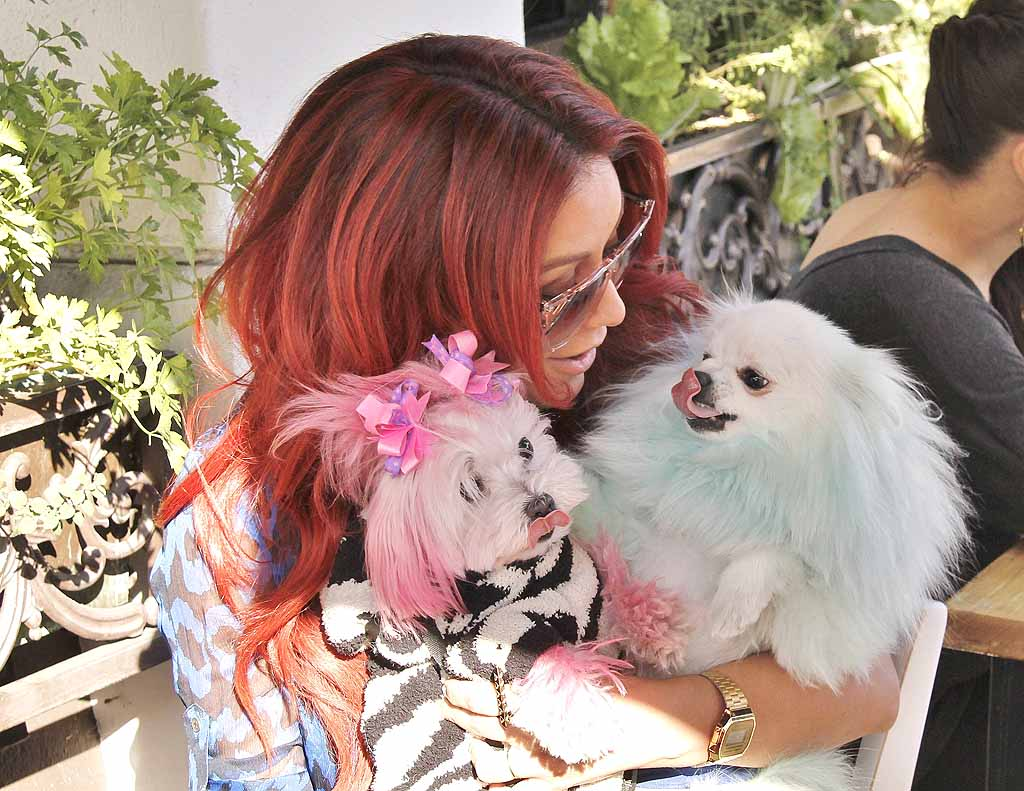 """The """"Celebrity Apprentice"""" contestant dined al fresco with her two dyed pink and blue pooches on Thursday. Although she has received backlash before over dying her dog, O'Day insists Ginger (the pink teacup Maltese on the left) """"likes to change up her look. """"I do it like anyone would color hair. She sits on my lap, and I have a brush, and I paint it on and use foils."""" (8/3/2012)"""