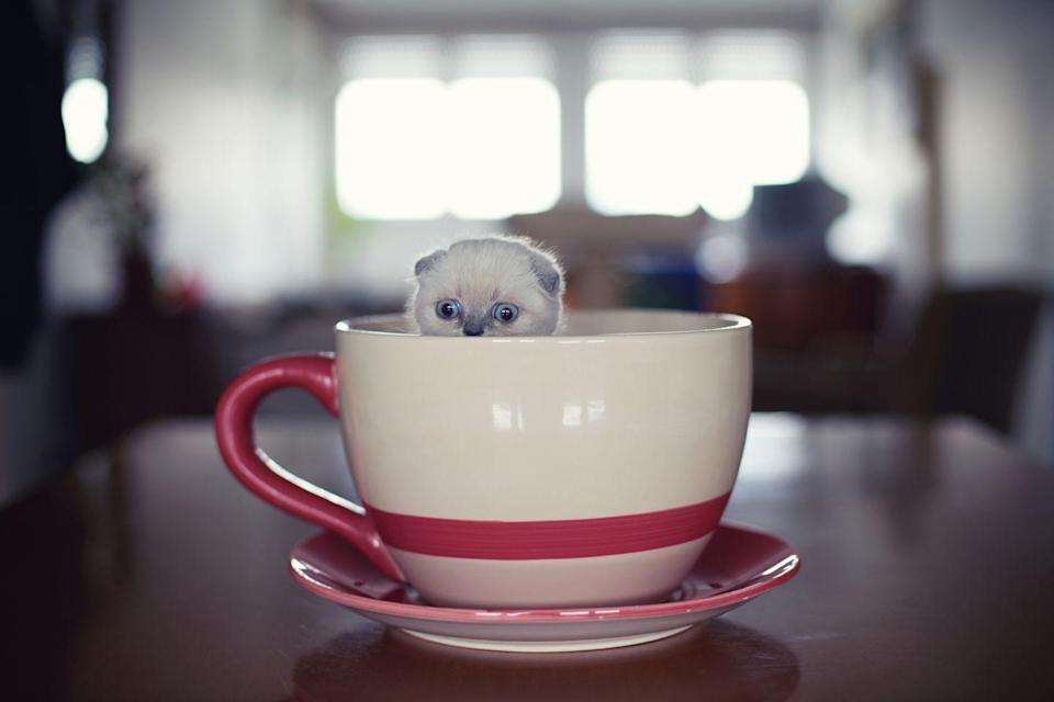 <p>Is the mug very large or is the cat very tiny? It doesn't matter, either way, this is perfect. </p>