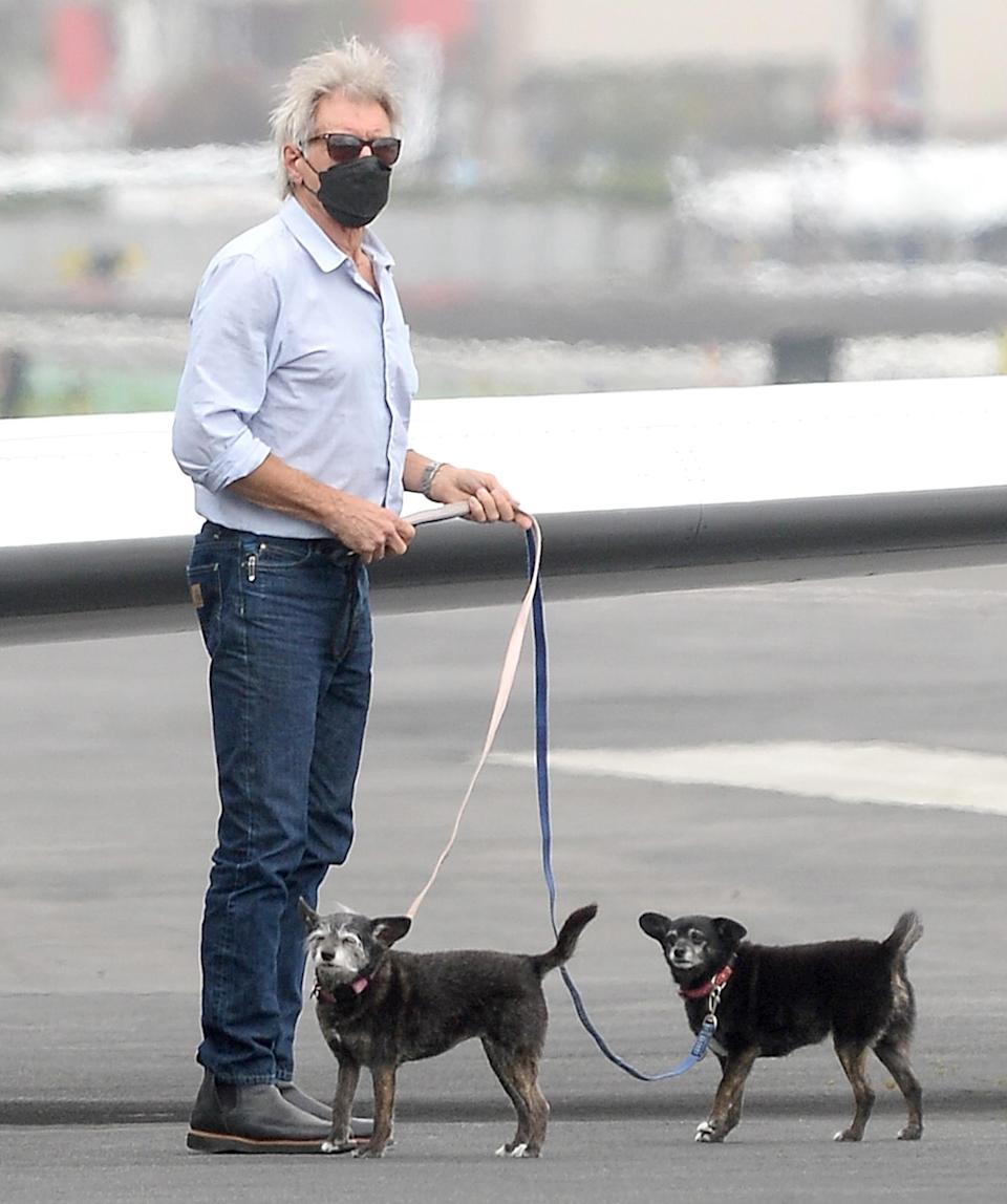 <p>Harrison Ford and Calista Flockhart leave their private jet with their dogs as they head into L.A. on Tuesday.</p>