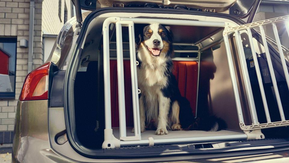pets dogs in cars