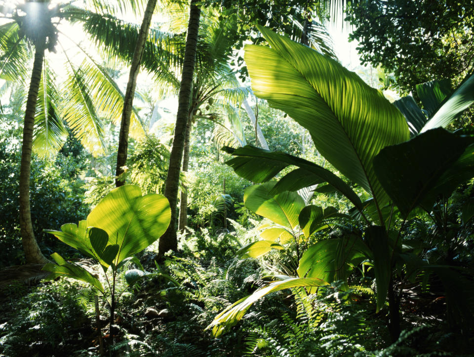 Humid tropical forests are under threat due to changing land use and climate change.
