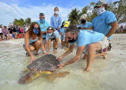 "In this photo provided by the Florida Keys News Bureau, Bette Zirkelbach, front left, and Richie Moretti, front right, manager and founder respectively of the Florida Keys-based Turtle Hospital, release ""Sparb,"" a sub-adult loggerhead sea turtle, Thursday, April 22, 2021, at Sombrero Beach in Marathon, Fla. The reptile was found off the Florida Keys in late January 2021 with severe wounds and absent a front right flipper. It was not expected to survive but was treated with a blood transfusion, extensive wound care, broad-spectrum antibiotics, IV nutrition and laser therapy. The turtle made a full recovery and was returned to the wild in conjunction with Thursday's Earth Day celebrations. (Andy Newman/Florida Keys News Bureau via AP)"