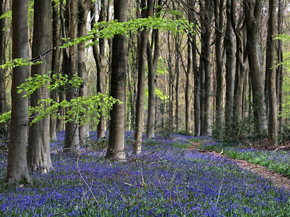 'The warning signs are loud and clear,' says Woodland Trust director of conservation and external affairs Abi BunkerGetty