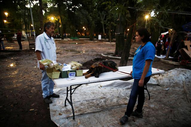 <p>A lost dog rests on a table next to vets at a provisional pet shelter after an earthquake at Condesa neighborhood in Mexico City, Mexico, Sept. 22, 2017. (Photo: Carlos Jasso/Reuters) </p>