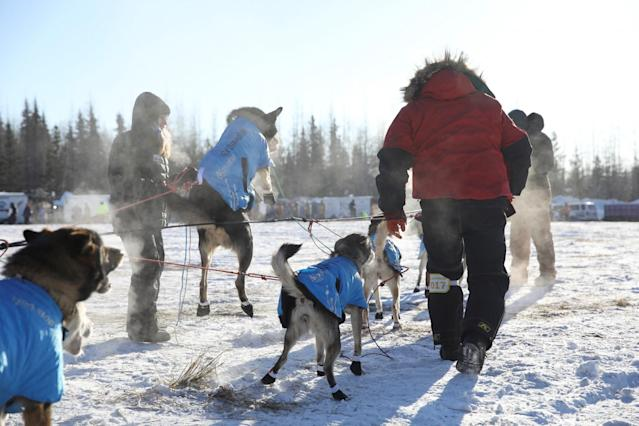 <p>Ray Redington Jr's team about to move to the start gate at the official restart of the Iditarod, a nearly 1,000 mile (1,610 km) sled dog race across the Alaskan wilderness, in Fairbanks, Alaska, U.S. March 6, 2017. REUTERS/Nathaniel Wilder </p>