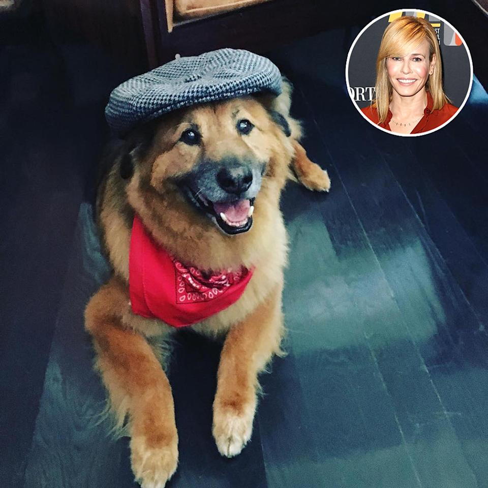 "<p>Like his famous owner, Chunk Handler isn't really into joining establishment things. ""Chunk hates Halloween too,"" Chelsea wrote. ""This is as far as he will go."" Cute enough, right? (Photo: <a rel=""nofollow"" href=""https://www.instagram.com/p/BMPFD99AeYA/?taken-by=chelseahandler&hl=en"">Instagram</a>/Getty Images) </p>"