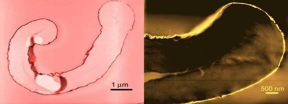 An image of cotton fibers coated with gold (left) and palladium (right) nanoparticles. Researchers are merging nanoscience and fashion design to color garments without using any dyes, and to add antibacterial properties to clothing.