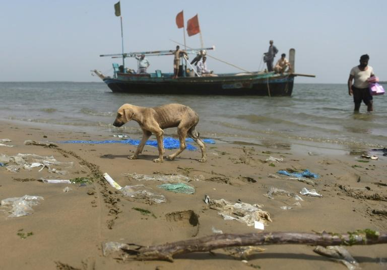 The dogs' survival depends almost entirely on the supplies brought to them by Karachi's fishermen as they trawl the coast