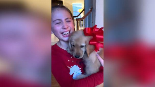PHOTO: Sisters Emme and Ella of Michigan were surprised with an early Christmas present of a 10-week-old golden retriever. (Nicole Barclay via Storyful)