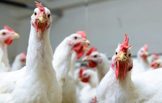 Animal rights and welfare groups say a proposition to speed up chicken processing lines will make slaughterhouses even worse for chickens.