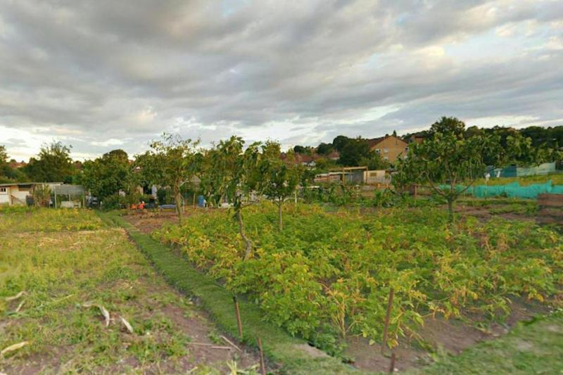 Grim discovery: the allotments in Colindale
