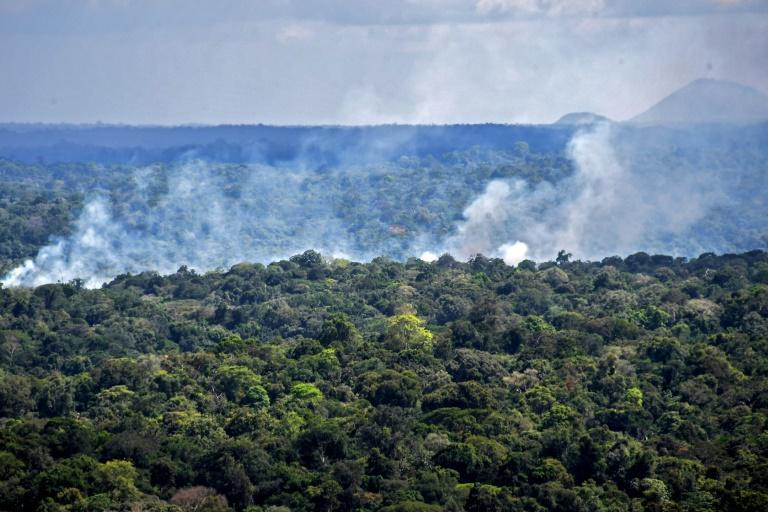 The Amazon basin contains about half of the world's tropical rainforests