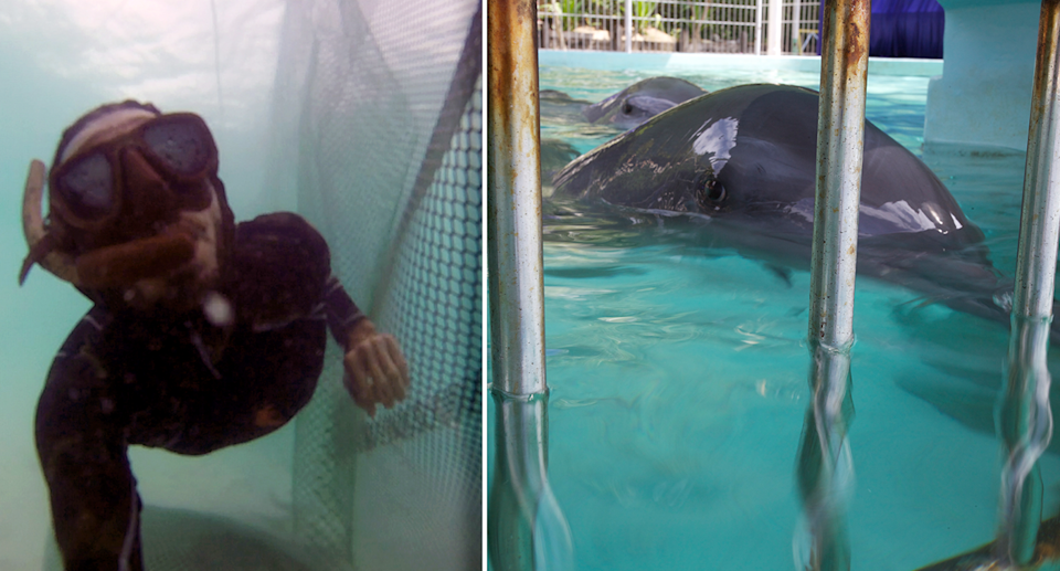 Mr O'Barry (left), a skilled diver, said it is thrilling to set dolphins free. Source: Dolphin Project