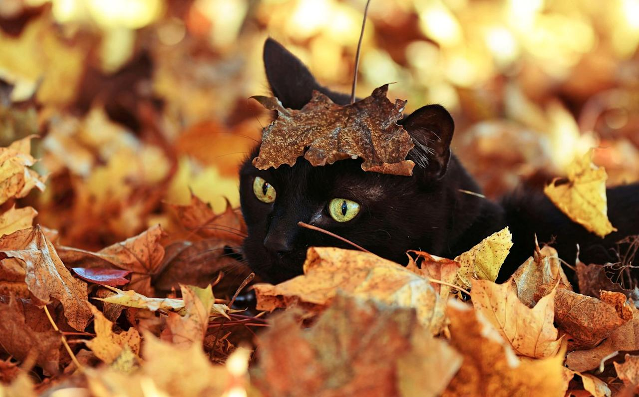 """<p>After fall was known as """"harvest,"""" it eventually can to be called """"autumn""""—so how did """"fall"""" became the dominant term? In the early 1600s, people started <a href=""""https://www.dictionary.com/e/fall/"""" target=""""_blank"""">moving into cities</a>, and use of the term """"harvest"""" lessened. They started saying """"fall of the leaf"""" to refer to the third season of the year, because the leaves would fall from the trees.  Over time, """"fall of the leaf"""" was shortened to """"fall,"""" and it stuck. </p>"""
