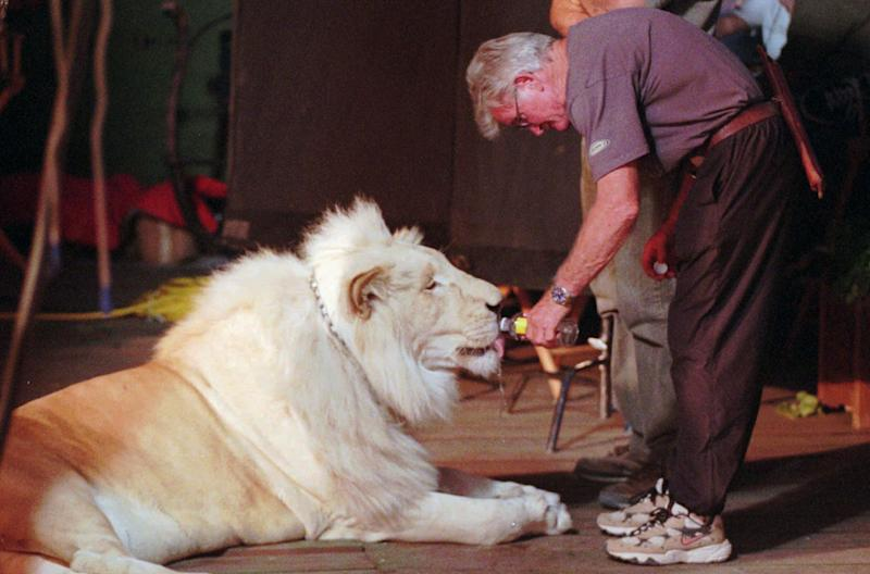 "Monte Cox, animal coordinator for Imax films, feeds bottle water to Pride, a 550-pound white lion, as he relaxes in the shade on the porch of Seigried and Roy's private enclave in Las Vegas ""Little Bavaria"" on Thursday, June 18, 1998. (AP Photo/Lennox McLendon)"