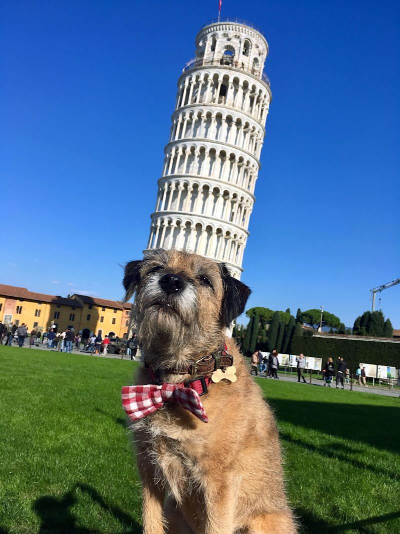 Pete the border terrier at the leaning Tower of Pisa, Italy. (Photo: Caters News)