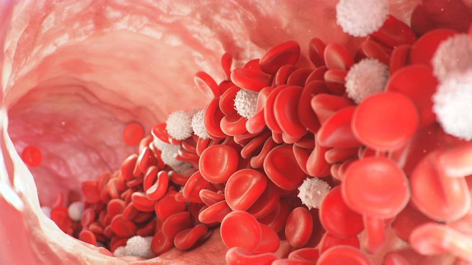 Red and white blood cells move inside the artery. Red blood cells carry nutrients for the whole body, for example, oxygen. Medical science illustration. 3d rendering