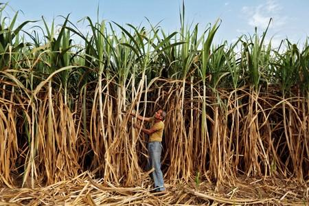 India to provide subsidy to export 6 million tonnes sugar in 2019/20