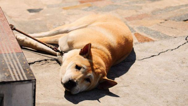 PHOTO: A dog lies down in an undated stock photo. (Getty Images, STOCK PHOTO)
