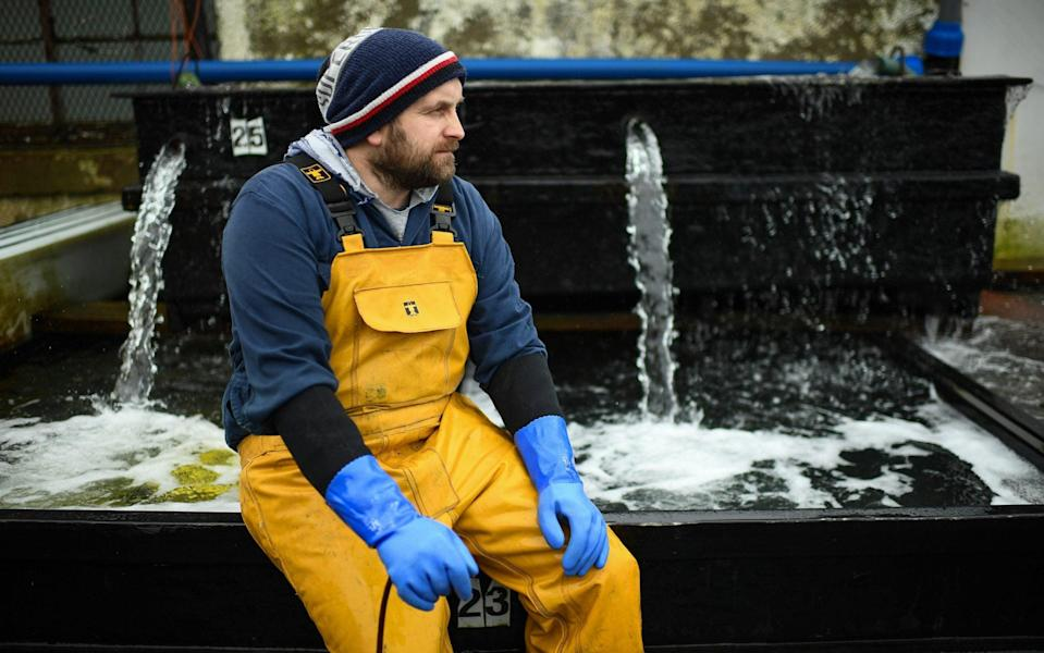 Jamie McMillan from Loch Fyne Langoustines. The SNP recently claimed that a third of the Scottish fishing fleet is tied up in harbour and losing £1 million a week, causing fresh and high quality produce to be lost - Getty Images