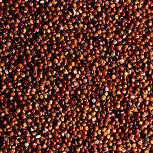 """<div class=""""caption-credit""""> Photo by: Gourmet, Romulo Yanes</div><b>QUINOA</b> <br> <br> <i>Slimming superpowers:</i> A complete protein, quinoa has all the essential amino acids needed to <a rel=""""nofollow noopener"""" href=""""http://www.self.com/drop10?mbid=synd_yshine"""" target=""""_blank"""" data-ylk=""""slk:build metabolism-revving muscle"""" class=""""link rapid-noclick-resp"""">build metabolism-revving muscle</a>. <br> <br> <i>The amazing proof</i>: Reduced-calorie dieters eating about 115 g of protein daily lost 22 percent more fat after four months than those who ate 70 g per day, <i>The Journal of Nutrition</i> reports."""