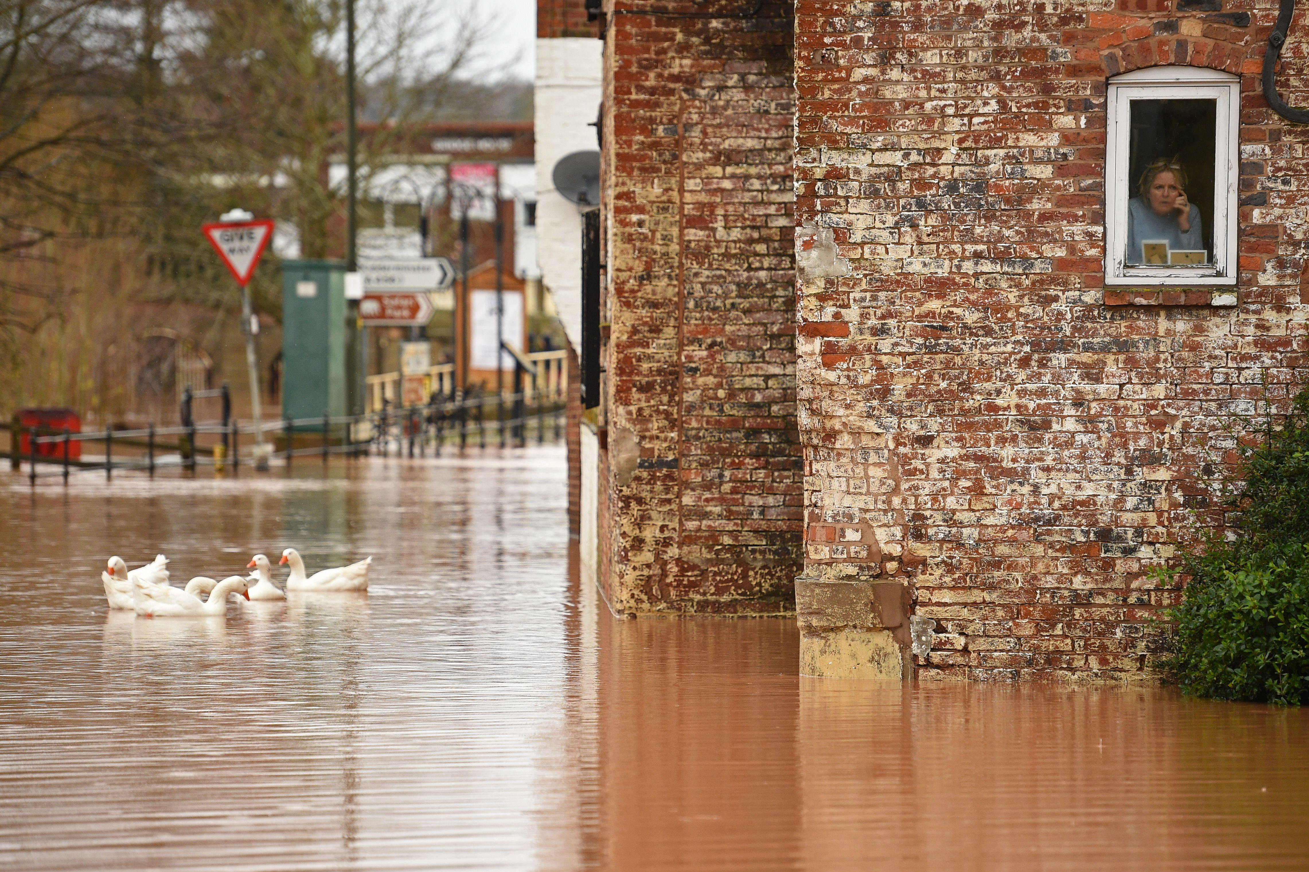 """TOPSHOT - A woman looks out of her window as geese swim past in floodwater after the River Severn bursts it's banks in Bewdley, west of Birmingham on February 16, 2020, after Storm Dennis caused flooding across large swathes of Britain. - As Storm Dennis sweeps in, the country is bracing itself for widespread weather disruption for the second weekend in a row. Experts have warned that conditions amount to a """"perfect storm"""", with hundreds of homes at risk of flooding. (Photo by Oli SCARFF / AFP) (Photo by OLI SCARFF/AFP via Getty Images)"""