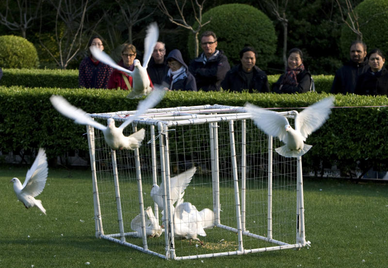 Visitors watch as a worker, unseen, uses a cage to catch pigeons as a precautionary measure against bird flu at People's Square in Shanghai, China, on Saturday April 6, 2013. Shanghai has reported two more cases of human infection of a new strain of bird flu, raising the number of cases in eastern China to 20. Six of the people who contracted the virus have died. (AP Photo) CHINA OUT
