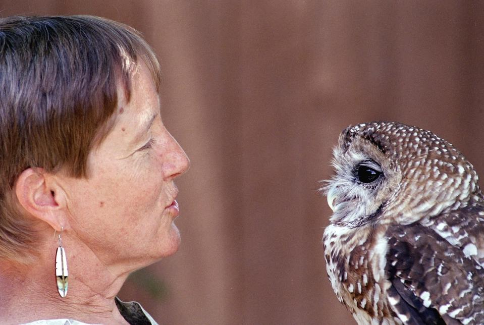 """FILE - In this a July 11, 2002, file photo, Dr. Kathleen Ramsay gets the attention of """"Manchado,"""" a Mexican Spotted Owl at the Wildlife Center near Espanola, N.M. A federal judge has halted tree-cutting activities on all five national forests in New Mexico and one in Arizona until federal agencies can get a better handle on how to monitor the population of the threatened owl. The order issued earlier Sept. 2019, out of the U.S. District Court in Tucson covers 18,750 square miles. (AP Photo/Neil Jacobs, File)"""
