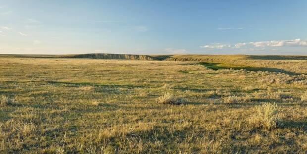 According to the Nature Conservancy of Canada, more than 70 per cent of the country's prairie grasslands have been lost, mainly due to the conversion of grasslands to croplands.  (B.Gjetvaj / branimirphoto.ca - image credit)