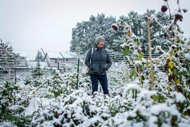 PHOTO: Brihannala Morgan looks over her five-row plot after harvesting the last of what she could from the plants in snow that hit Missoula, Mont., Sept. 29, 2019. (Sara Diggins/The Missoulian via AP)