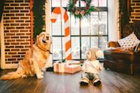 """<p>Family pets help break the ice for camera-shy family members, and lead to more genuine moments in your holiday photo, say the editors at <a href=""""https://www.dreamstime.com/"""" rel=""""nofollow noopener"""" target=""""_blank"""" data-ylk=""""slk:Dreamstime.com"""" class=""""link rapid-noclick-resp"""">Dreamstime.com</a>. Just remember to bring the pup treats! </p>"""