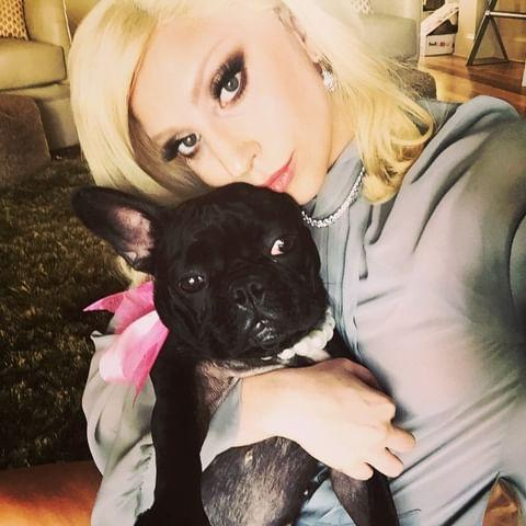 <p>Lady Gaga and her dog Miss Asia in 2015 </p> (Lady Gaga/Instagram)
