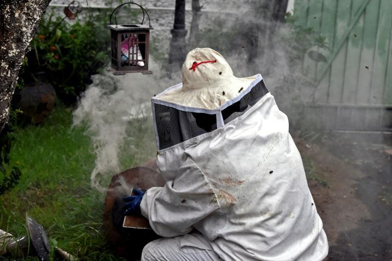 Veterinarian Adriana Veliz works to remove bees from the garden of a house near the Mexican capital