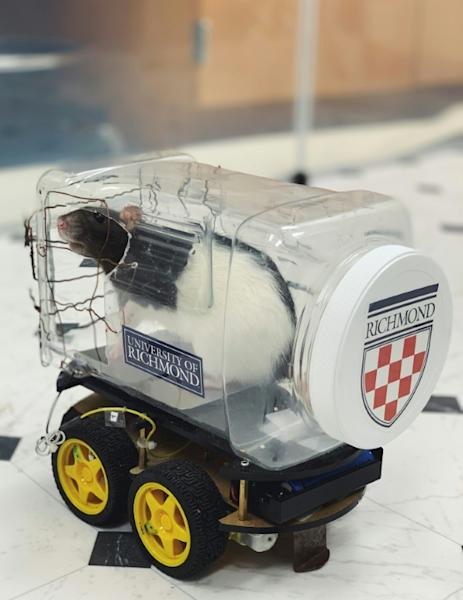 Scientists modified a robot car kit by adding a clear plastic food container to form a driver compartment with an aluminum plate placed on the bottom