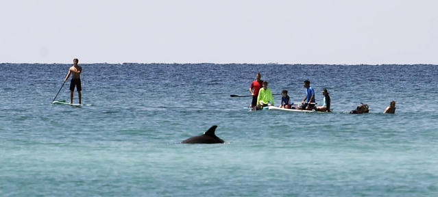 """FILE - In this April 5, 2018, file photo, paddleboarders watch a dolphin swim by near Grayton Beach State Park in Florida. Stephen Leatherman, a coastal scientist and professor at Florida International University, has been drafting a list of the best beaches in the U.S. under alias """"Dr. Beach"""" since 1991. This year he has named Grayton Beach State Park the third-best in the country. (Devon Ravine/Northwest Florida Daily News via AP, File)"""