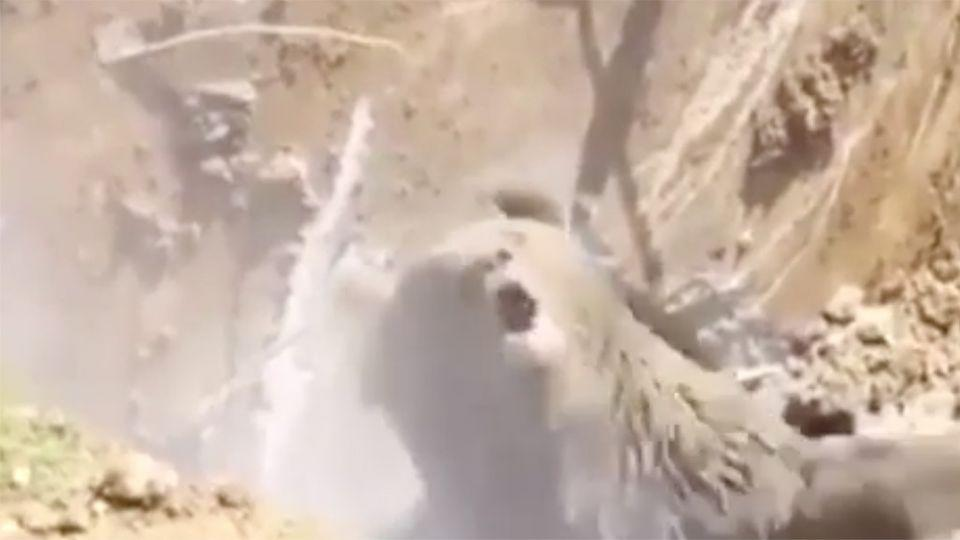 The bear was less than impressed with its rescuers. Source: YouTube