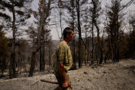 Christos Livas, 48, resin collector with his tool as walks in a burnt pine forest near Agdines village on the island of Evia, about 185 kilometers (115 miles) north of Athens, Greece, Wednesday, Aug. 11, 2021. Residents in the north of the Greek island of Evia have made their living from the dense pine forests surrounding their villages for generations. Tapping the pine trees for their resin has been a key source of income for hundreds of families. But hardly any forests are left after one of Greece's most destructive single wildfires in decades rampaged across northern Evia for days. (AP Photo/Petros Karadjias)