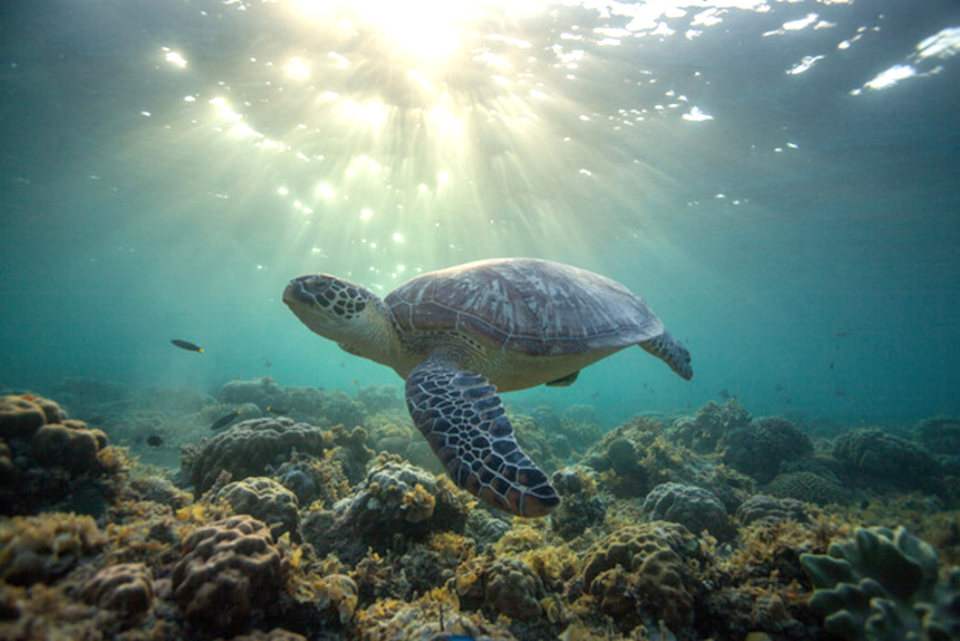 Cruise ships pose a risk to travelling sea turtles, review finds (Beacon Development Company / Hector Barrios)