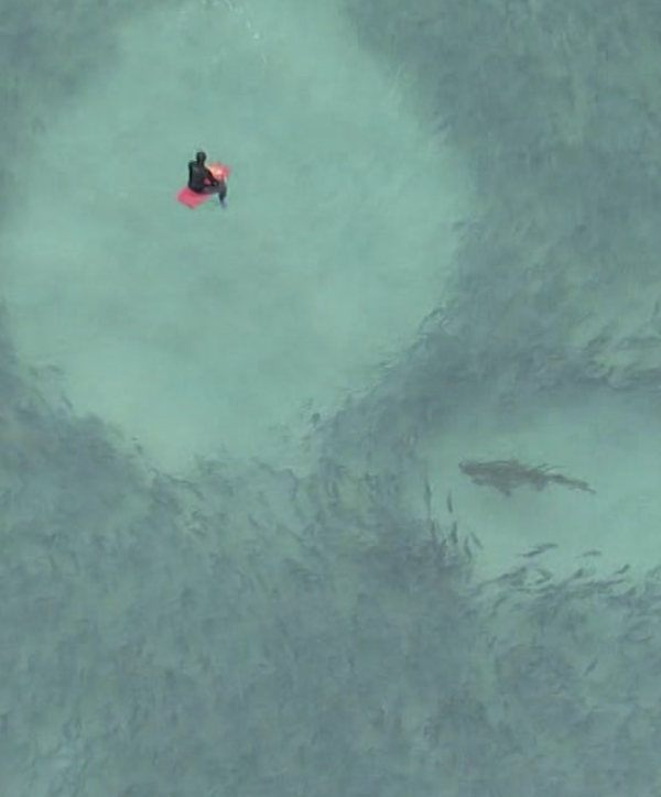 A shark is seen metres away from a person on a red boogie board. Source: Twitter/@JoshBavas