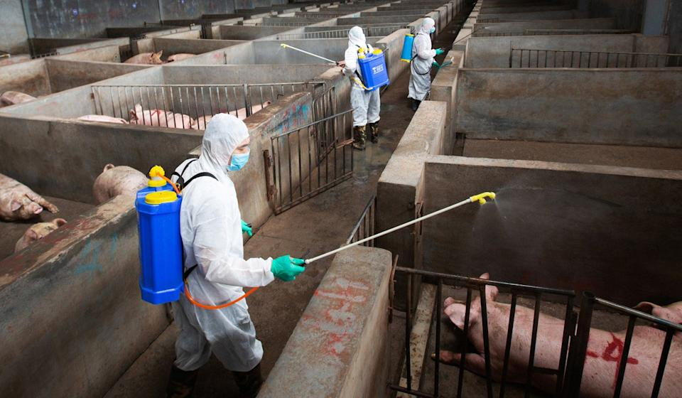 Local husbandry and veterinary bureau workers in protective suits disinfect a pig farm as a prevention measure against African swine fever in Jinhua, Zhejiang province. Photo: Reuters
