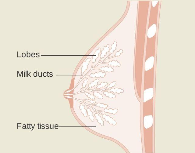 Blocked Milk Ducts: Natural Remedies That Help